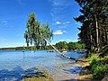 Jezioro Wdzydze, brzoza a za nią kąpielisko.jpg