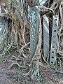 Kam Tin Tree House - 2007-09-30 14h00m08s SN200791.jpg