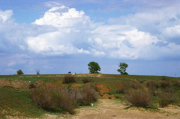 Russian steppe in spring