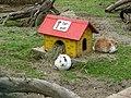 Kaninchengehege - panoramio.jpg