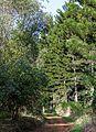 Karura Forest Nairobi 02.JPG