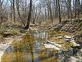 Kaskaskia River tributary.JPG