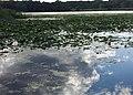 Keller Lake - Maplewood, MN - panoramio (2).jpg
