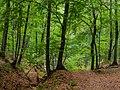 Kemmern Semberg Burgstall 9020182.jpg