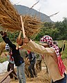 Khamsone threshing rice (5143590258).jpg