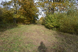Kings and Bakers Woods and Heaths nature reserve in the United Kingdom