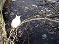 Kočka na větvi v Rize (2).jpg