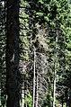 Kopaonik 0102.jpg