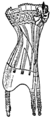 Korsett från år 1910, Nordisk familjebok.png