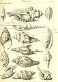 L'histoire naturelle éclaircie dans deux de ses parties principales, la lithologie et la conchyliologie - dont l'une traite des pierres et l'autre des coquillages - ouvrage dans lequel on trouve une (14595309557).jpg