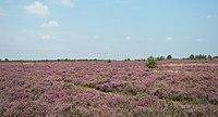 Lüneburger Heide 109 cropped.jpg