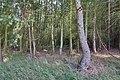 LSG Forst Rundshorn nahe Würmseeweg IMG 0156.jpg