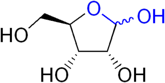 Lactol - The lactol functional group, highlighted in blue, is present in many sugars such as ribose shown here.