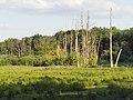 Landschaft im Tegeler Fließ, Naturschutzgebiet Berlin.jpg