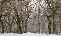 Langaa egeskov rimfrost.jpg