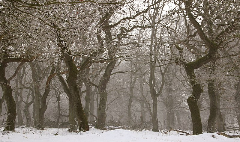File:Langaa egeskov rimfrost.jpg