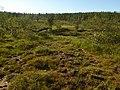Lapland - Urho Kekkonen National Park - 20180728171740.jpg