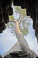 Larbre qui danse (Preah Khan, Angkor) (6944583985).jpg