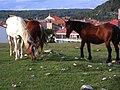 Las Majadas caballos paciendo.jpg