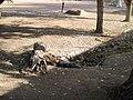 Las Vegas 2009 22 - panoramio.jpg