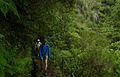 Laurissilva da Madeira 03.jpg