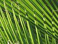 Leaf-texture-Marrakesh-1.jpg