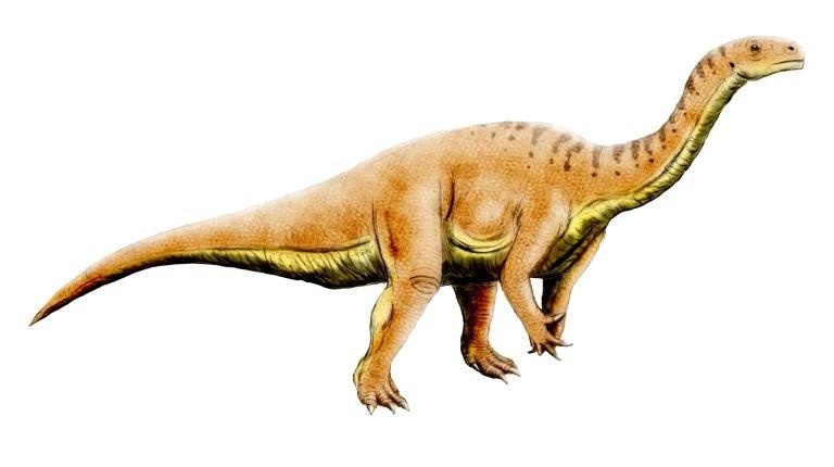 Leonerasaurus NT