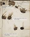 Lichenes Helvetici III IV 1842 004.jpg