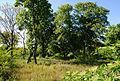Liesing Mühlengrundstück Wald.jpg