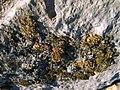 Liquenes de las Saladas de Bujaraloz (10760058183).jpg