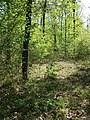 Locatelliwald westlich des Buchbergs sl5.jpg