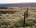 Lonely sheep - geograph.org.uk - 604092.jpg