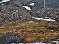 Longyearbyen Blick aus meinem Hotelzimmer Rentier 1.jpg