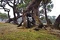 MADEIRA Fanal 2012 - panoramio.jpg