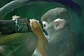 Magellan Monkey.jpg