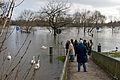 Main-Hochwasser Januar 2011 Hochwassergucker DSC 7074.jpg