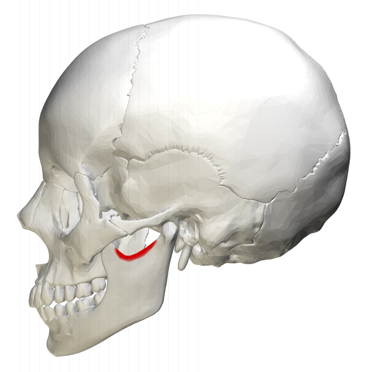 Mandibular Notch Wikipedia