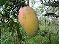 Mangue d'Ampiraboka.jpg