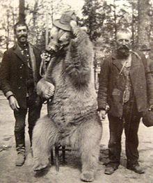 https://upload.wikimedia.org/wikipedia/commons/thumb/a/a9/Mangum_dancing_bear.jpg/220px-Mangum_dancing_bear.jpg