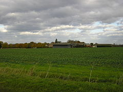 A green picture.  Grassy field margins in the immediate foreground, and behind a vigorously-leafed field of beet, a slightly darker green.  On the horizon is  a cluster of modern barns, and a modern farmhouse with an older building on the left.  Above them all is a sky mostly dark with cumulus clouds, with the palest patch of blue above our heads.