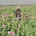 Marine in a poppy field (4525477351).jpg