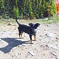 Marinilla Colombia - Street Dogs (13).jpg