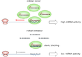 MiRNA mimic and miRNA inhibitor.png