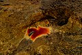 Mining Colors Iii (105063415).jpeg