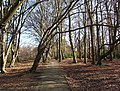 Moat Mount tree lined walk. - geograph.org.uk - 127641.jpg