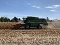 Moissonnage du maïs en septembre 2020, rue des Andrés, Saint-Maurice-de-Beynost, Ain, France (2).jpg