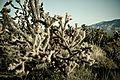 Mojave Desert (2).jpg
