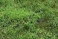 Monarch butterfly resting on a milkweed plant. (415e9c0a-5b3d-4eea-b565-9f1319d9f14f).JPG