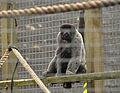 Monkey Sanctuary 3.jpg