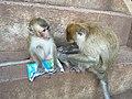 Monkeys at Wat Tham Suea 03.jpg